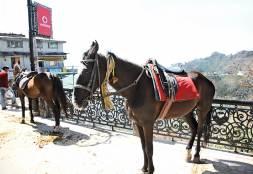 Camel's Back Mussourie, Uttarakhand