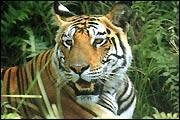 Chilla Wildlife Sanctuary, Uttarakhand