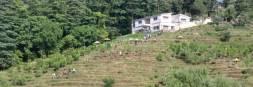 Chaubatia Orchards Ranikhet, Uttarakhand