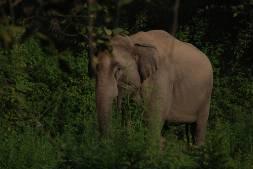 Jungle Safari Lansdowne, Uttarakhand