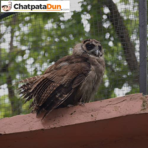 Owl at DehraDun Zoo